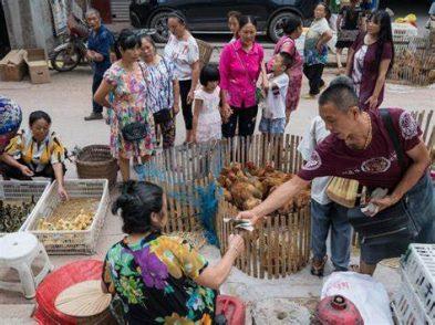 In Cina aumentano i divieti per proibire il consumo della carne di cani e gatti